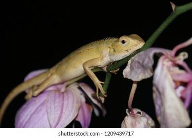 cameleon in plant