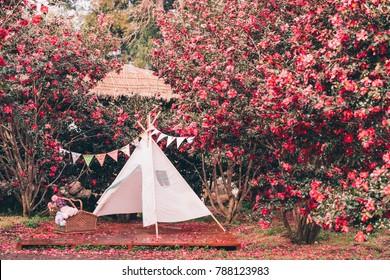 Camellia of Jeju Island, Korea