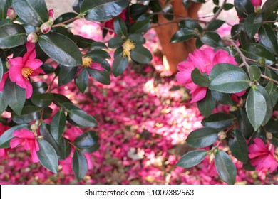 Camellia leaf background