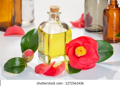 Camellia oil. Camellia flower and oil glass bottle for beauty, skin care, wellness and medicinal purposes