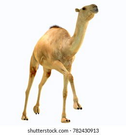 Camelops hesternus on White 3D illustration - Camelops was a camel-type herbivorous animal that lived in North America during the Pleistocene Period.