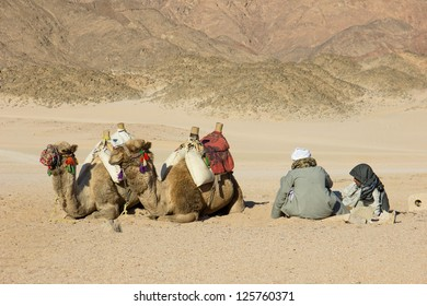 camels and Bedouins in the desert