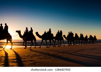 Camels in Broome, Australia. Sunset on Cable beach, the most beautiful beach in the world
