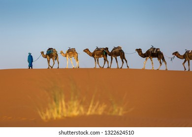 Camels caravan in the dessert of Sahara with beautiful dunes in background. Morocco