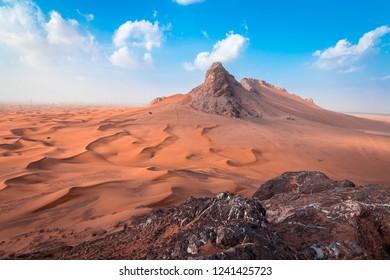 Camels at Desert UAE