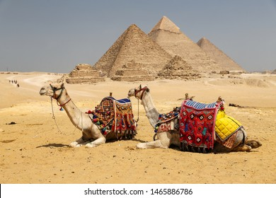 Camels in Giza Pyramid Complex, Cairo City, Egypt