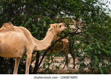 Desert Plants Animals Images Stock Photos Vectors