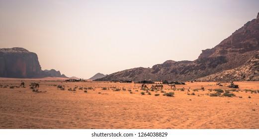 Camels in the heart of the Wadi Rum desert, Jordan
