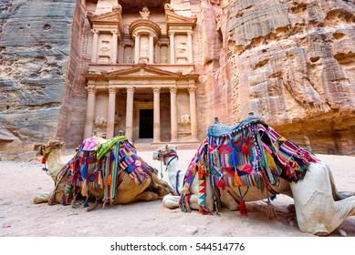 Camels lying in front of El-Khazneh in the ancient city of Petra. Jordan
