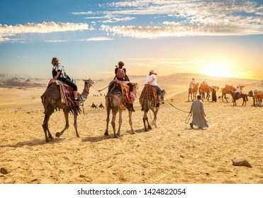 Camels near the Pyramids of Giza in Egypt
