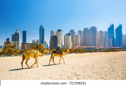 Camel dubai images stock photos vectors shutterstock the camels on jumeirah beach and skyscrapers in the backround dubai united arab emirates altavistaventures Choice Image