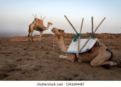 Camels on the top of the rock, Ethiopia