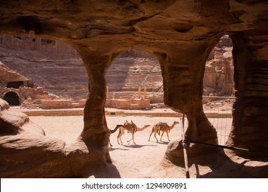 camels in the petra one of the Seven Wonders of the World
