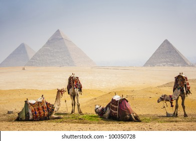 Camels with pyramid