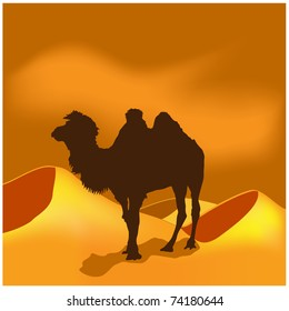 camels in sahara illustration