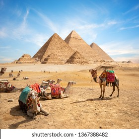 Camels in sandy desert near mountains at sunset
