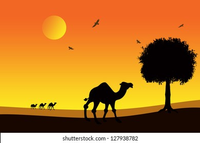 camels at sunset in the desert