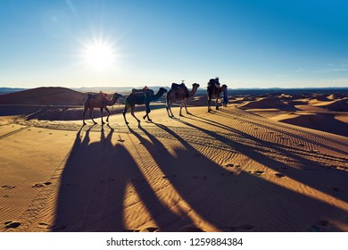 Camels and their shadows in desert