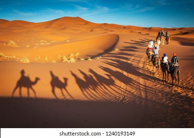 camels trekking guided tours in Merzouga Morocco Sahara desert