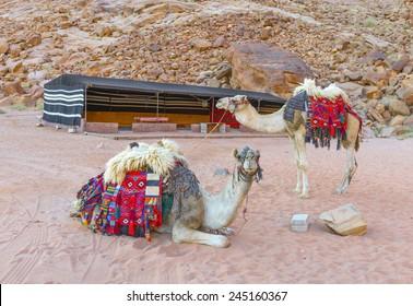 Camels in Wadi Rum desert, Jordan
