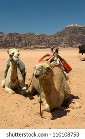 Camels in Wadi Rum, the desert valley made famous by TE Lawrence. Its Arabic meaning is lunar valley