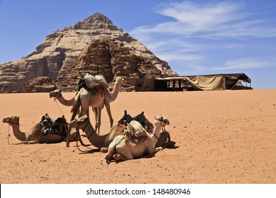 Camels in Wadi Rum natural reserve , resting by a Bedouin tent