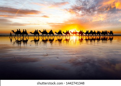 Camels walking along Cable Beach at sunset in the north-west town of Broome, Western Australia, Australia. Camel rides at sunset are a popular tourist activity in Broome.