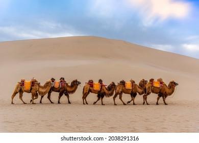 Camels Walking in the Desert