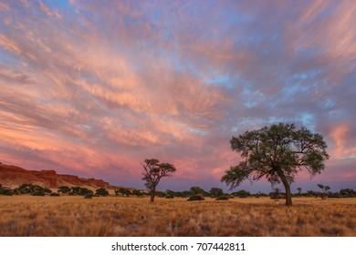 Camelthorn tree sunrise