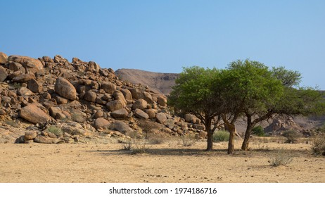 Camelthorn trees and a hill with stones in a dry and barren landscape. Near Fish River Canyon, Namibia, Africa. Seen on a game drive. Tourism and vacations concept.