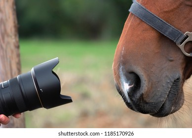Camera lenses pointing towards a very curious horse, peering with its brown nose with large nostrils.