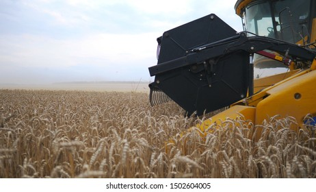 Camera moving through wheat stalks and following to grain harvester. Combine slowly riding through field and gathering crop of ripe barley. Slow mo Side view