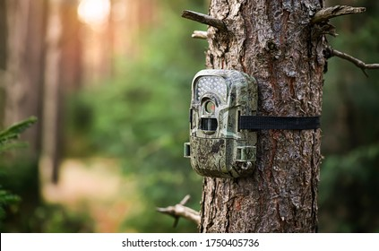Camera trap or photo cameras mounted on pine tree in deep forest for wild animals location monitoring. copy space for text.
