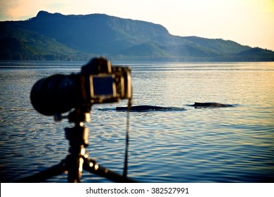 Camera with the Whale Back