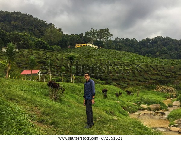 CAMERON HIGHLAND,MALAYSIA-8.8.2017 : scenery of  bharat tea plantation at noon. bharat tea plantation is one of the biggest tea plantations in Malaysia.