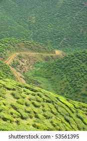 cameron highlands tea plantation area
