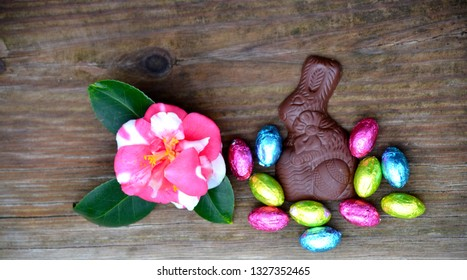 Camilla bloom with chocolate Easter bunny and foil Easter eggs.