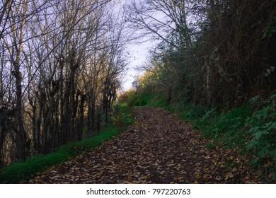 Camino de Aguas, Fontanales
