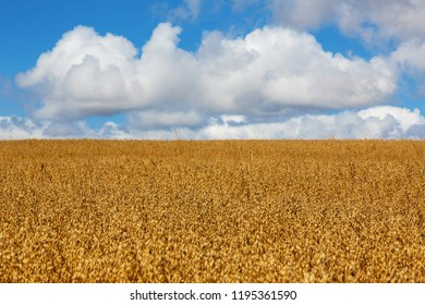 Camino de Santiago (Spain) - Fields and clouds along the way of St.James, in the spanish meseta