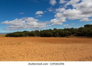 Camino de Santiago (Spain) - Fields and vegetation along the way of St.James, in the spanish meseta