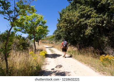 Camino de Santiago (Spain) - A pilgrim walking along the way of St.James