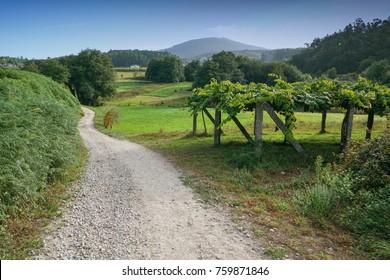 Camino de Santiago trail through the landscape close to Caldas de Reis, Galicia, Spain