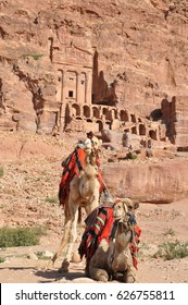 Cammels at Petra, Urn Tomb in the background, Lost rock city of Jordan Petra