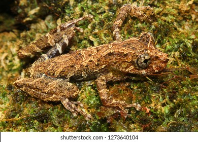 Cammo frog on forest ground