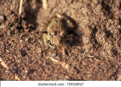 Similar Images, Stock Photos & Vectors of Beautiful spider tarantula