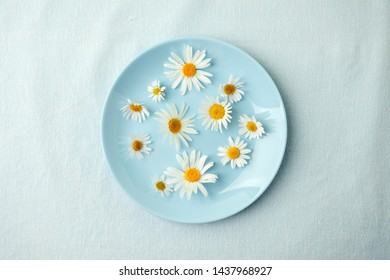 camomile blossoms, dried camomile flowers. doctor treatment and prevention of immune concept, medicine - folk, alternative, complementary, traditional medicine