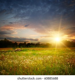 camomile field and sunset landscape