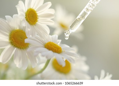camomile oil. Pipette with essential oil of camomiles and flowers .Beauty and health concept. Organic pure natural oil