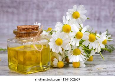 Camomile oil, white daisy oil