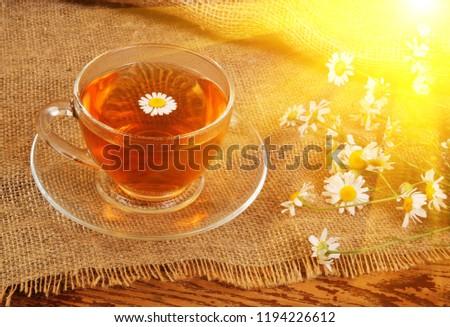 camomile-tea-sunlight-rays-450w-11942266